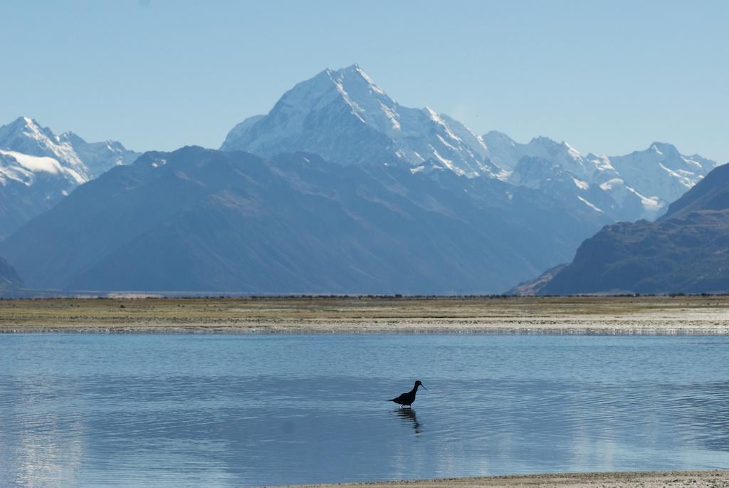 Black stilt, Mt Cook, Southern Alps, New Zealand (Jon Sullivan/Flickr)  https://www.flickr.com/photos/mollivan_jon/7130824719/in/photolist-dnWxL3-nCYFXQ-9keFQg-7LmsWG-ujLGm-4bkTKL-6yBbXc-7JFVHY-8XHzFK-8XLCJE-c6bNpd-curced-9vQKvv-hYNUKh-7DZd3B-dwgRwo-7F34vh-bS8kKM-8mQLvy-55NFcb-G6J3h-4oLDMK-ankBr-dyNJYr-p3NvR-6nXyeE-6nTsJv-6AEYjf-6nTuGz-6AEQSs-6AAMPg-aM1kQM-mnhGTD-mnK734-mnM1jW-mniSLU-aM1LyF-mp3uxH-7EBTBj-mp3rpP-7ynxLC-9NC9uz-4bkVhu-94XSz7-6nKVTL-8Lt1V-73bm8j-6nFJa4-7vpuA7-eH1x7T