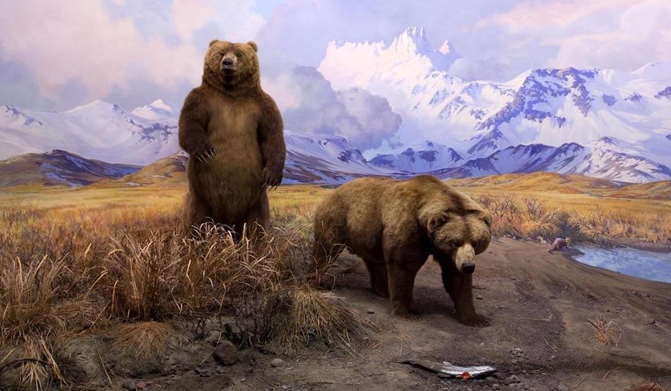 alaska brown bear bso