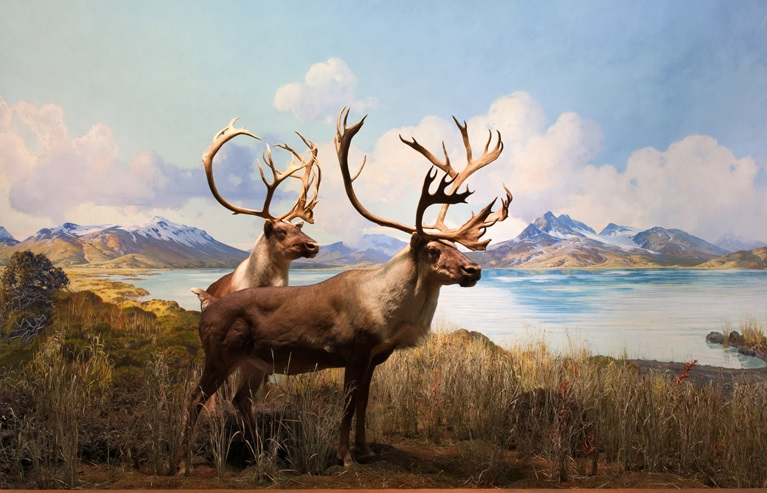 caribou bso