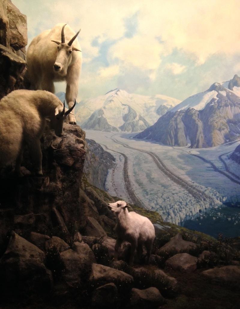 mountain goat bso