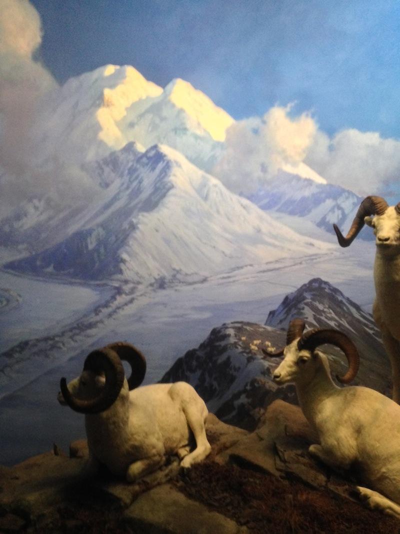 mountain sheep bso