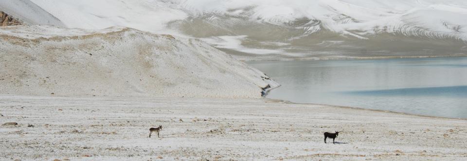 "The Karakoram Glacier's Secret to ""Eternal Youth"""
