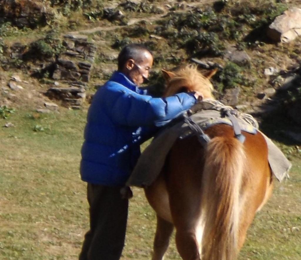 Sherab Lhundrub saddling a horse. (photo: Ben Orlove)