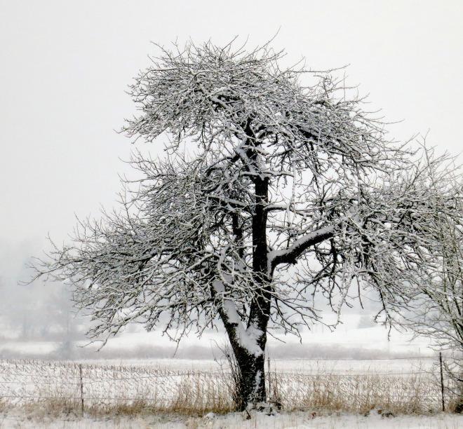 snow12201335