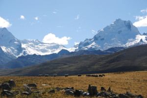 Sheep grazing below Mt. Huantsán in Peru's Cordillera Blanca. Source: Mattias Borg Rasmussen