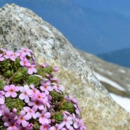Where Can Alpine Plants Hide from Global Warming?
