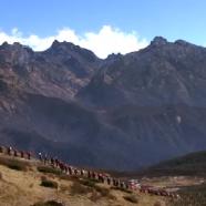 Pad Yatra: A Himalayan Journey