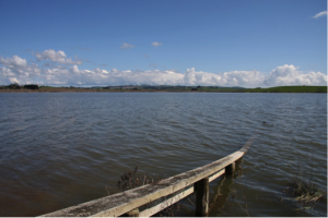 An image of Lake Waahi, a eutrophic lake in Huntly, New Zealand.