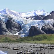 Roundup: Fish in Patagonia, Film in Kashmir & Glacial Georgia