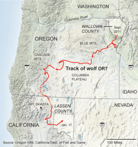 Route taken by Wolf OR-7 on his first trip from Oregon into California (source: NYTimes)