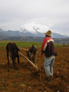 farmer with two oxen and plow, in front of glaciers