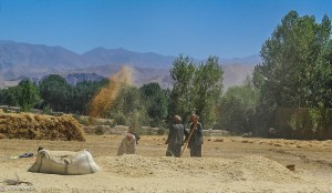 Winnowing wheat in Bamiyan, Afghanistan (source: Hadi Zaher)