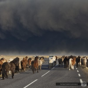Horses facing the volcanic ash-cloud (source: Ragnar Th. Sigurðsson)
