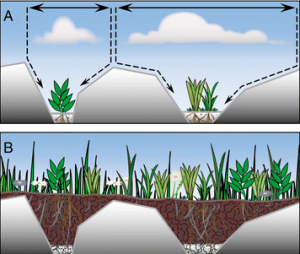 Schematic from the study showing the build up of soil and plant matter on top of the rocks. This eventually stops the funneling process found in early stages. (Figure:by Kristel Perreijn)