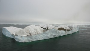 The iceberg where the gulls were breeding. Source: Polar Biology.