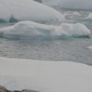 Polar Ecology in Flux Due to Climate Change