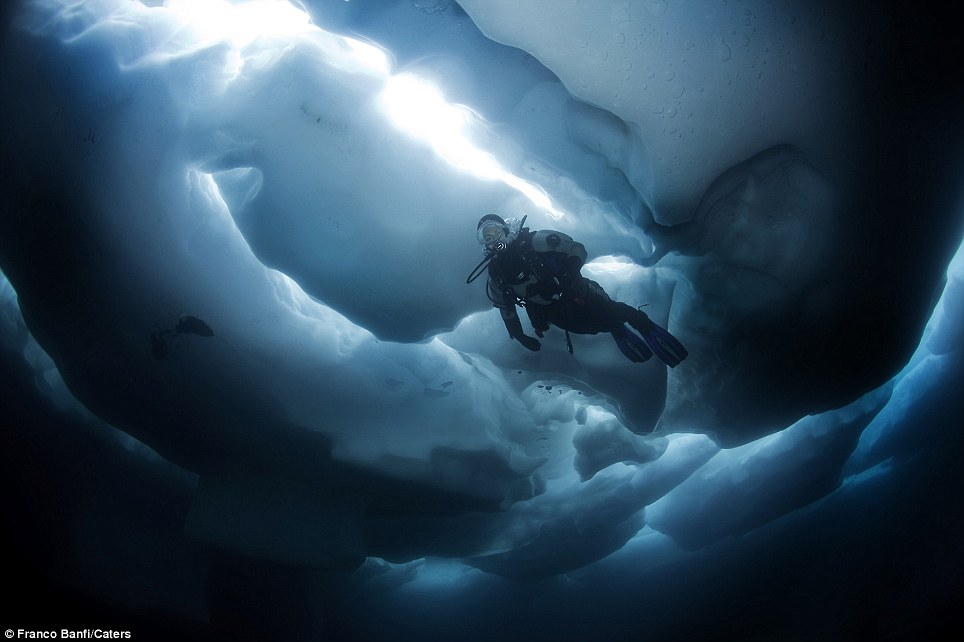 Banfi's diving partner dives feet from the surface, obscured by thick chunks of ice (Source: Franco Banfi)