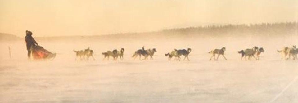 Survival is just the tip of the iceberg in Blair Braverman's memoir on Arctic life