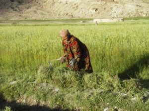 Pamiri farmer