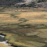 Science and Politics in a Mountain Grassland in Peru