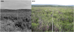 Photographs of the Muldrow Glacier study area from the original and current study (source: Ecosphere)
