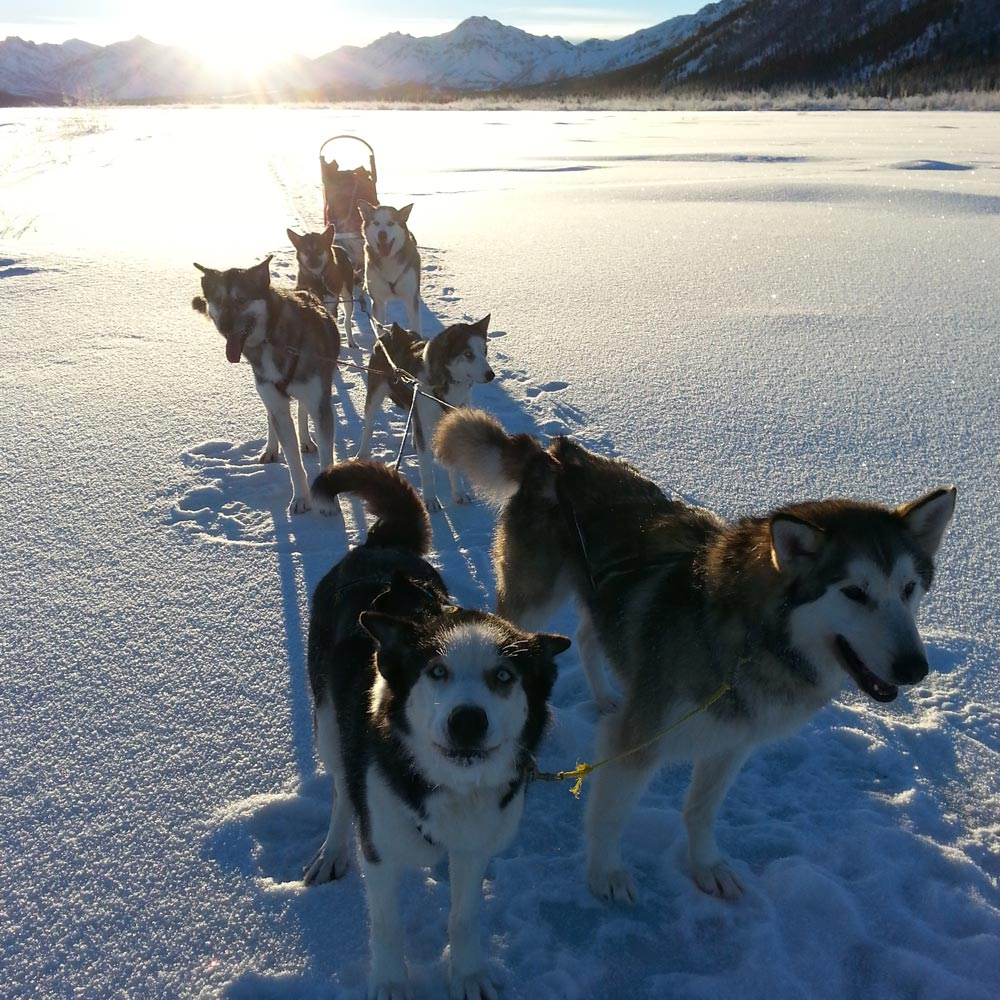 The Climbing Routes Litter Dog sled team in Denali National Park (NPS)