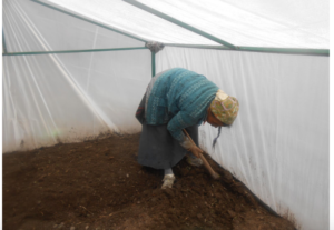 Tharchen Tamang, 62, starting to sow her family greenhouse in Mundu, which sits at 3500m above sea level. (Source: Chhime Tamang).