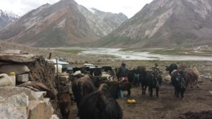 Camp at summer pasture (doska) in Zanskar (source: Josianne Robichaud)