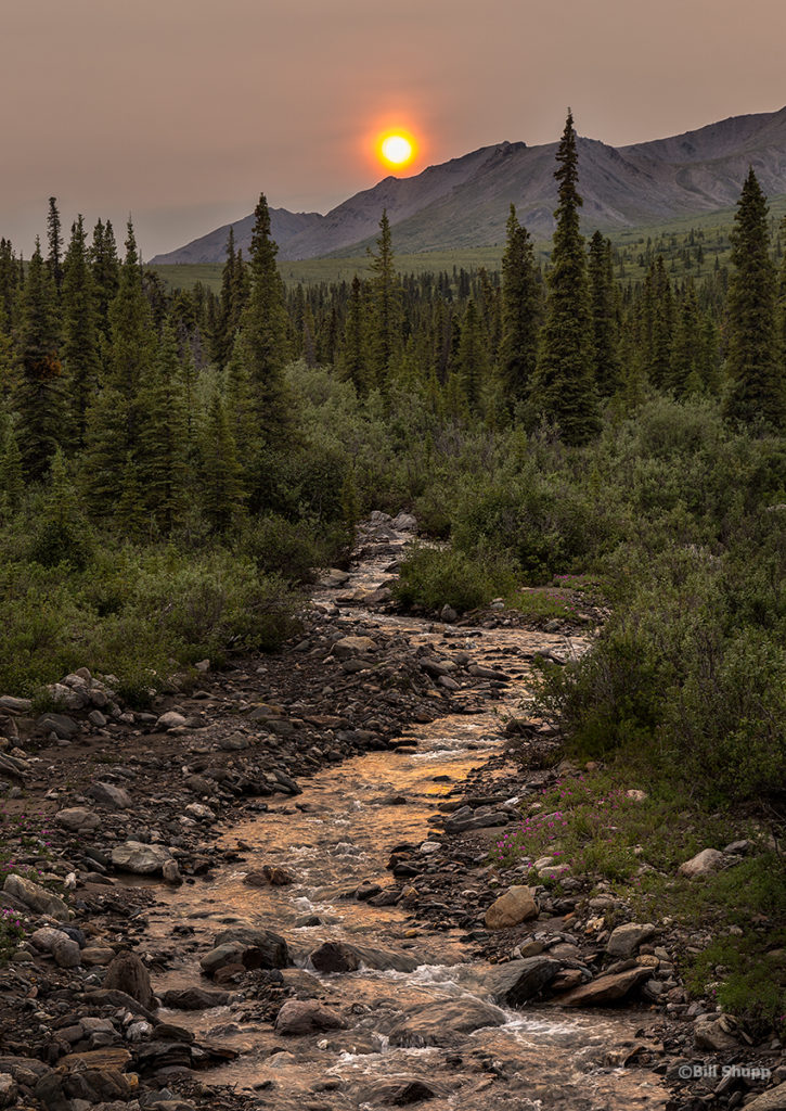 Denali National Park (Source: Creative Commons, Bill Shupp)