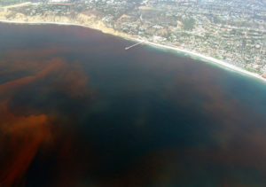 la-jolla-red-tide-780
