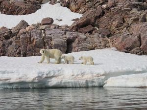 Polar bear and her cubs in Svalbard (source: Alistar Rae/Flickr)