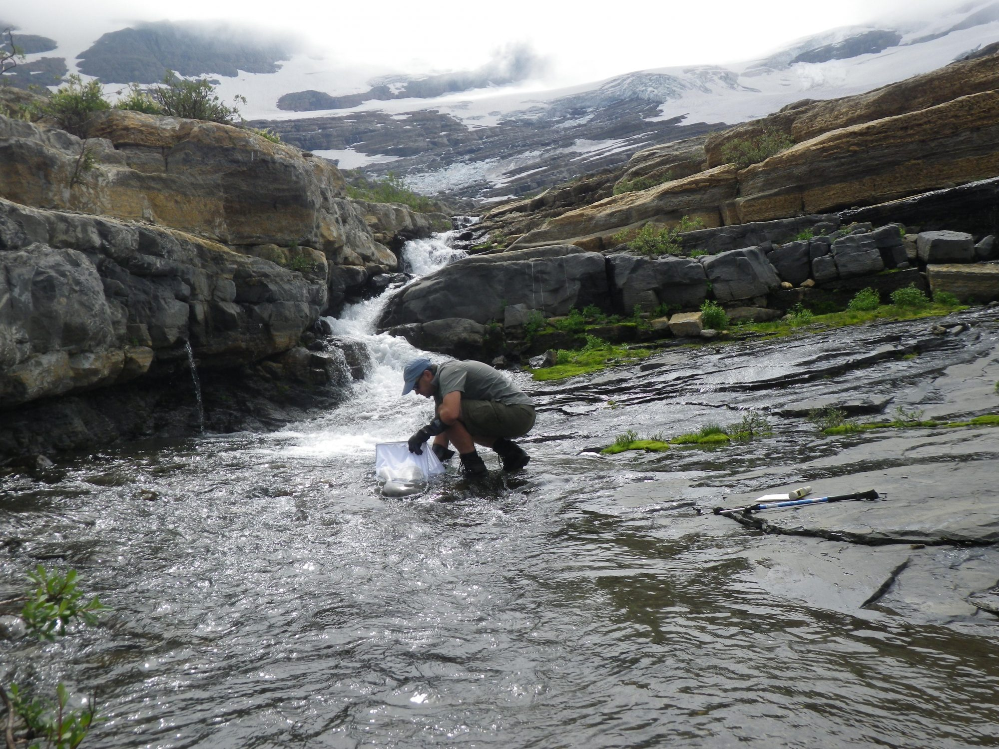 A researcher collecting samples from a stream fed by meltwater from Blackfoot Glacier (Source: Joe Giersch/USGS).