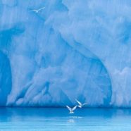 Roundup: Rock Glaciers, Ice Tongues and Flood Warnings