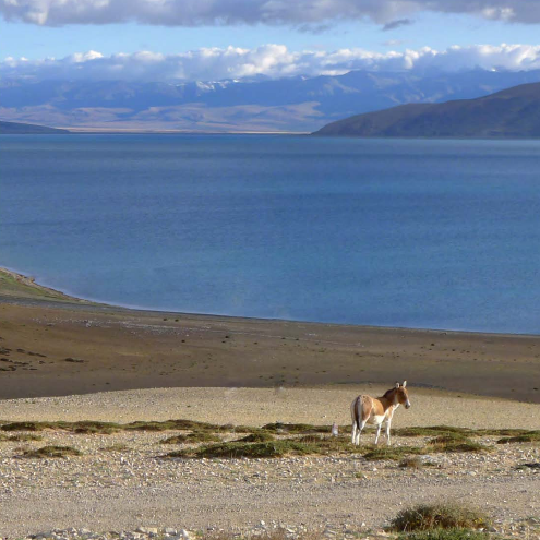 The Tibetan landscape near Mount Kailash (Source:
