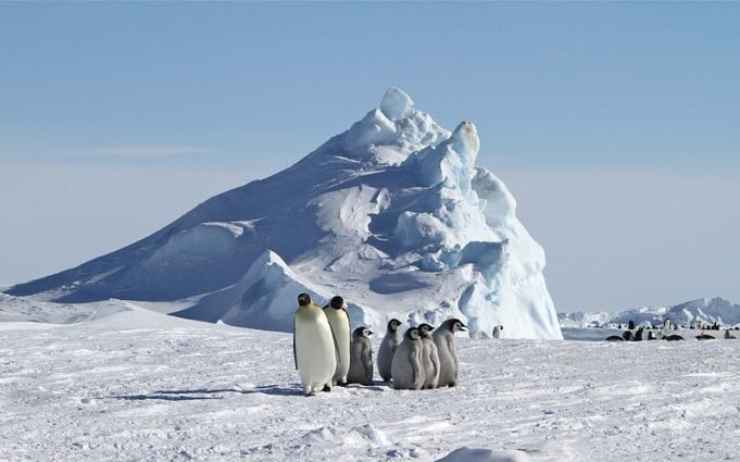 800px-Emperor_penguins_at_Snow_Hill_Island
