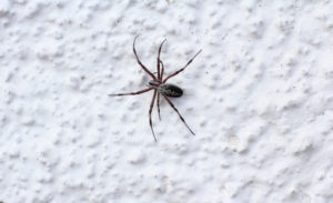 spider-on-wall-2