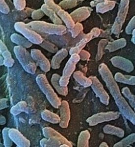 Ancient bacteria found in glaciers (source: Sina Tech).