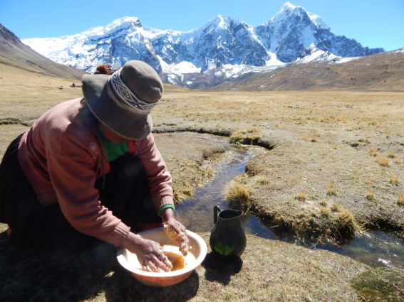 A herder washes quinoa in the glacial springs emanating from the glaciated peaks of the Cordillera Vilcanota.