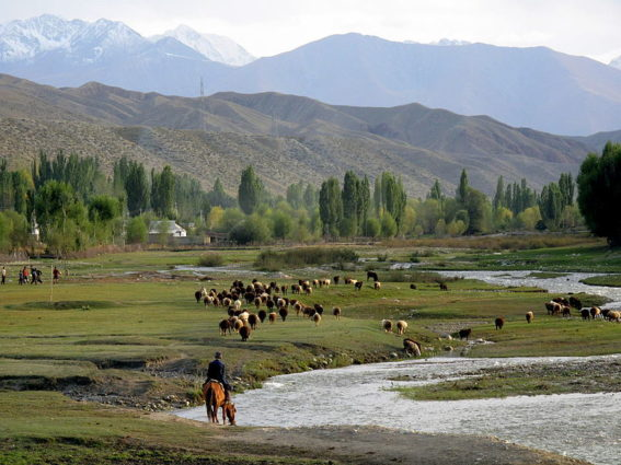 Bringing the sheep home on the southern shore of Issy-Kol in Kyrgyzstan (Source: Peretz Partensky/Creative Commons).