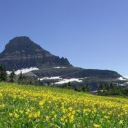 Photo Friday: Spring Arrives at the Glaciers!