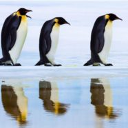 Explore the Homeland of the Emperor Penguin