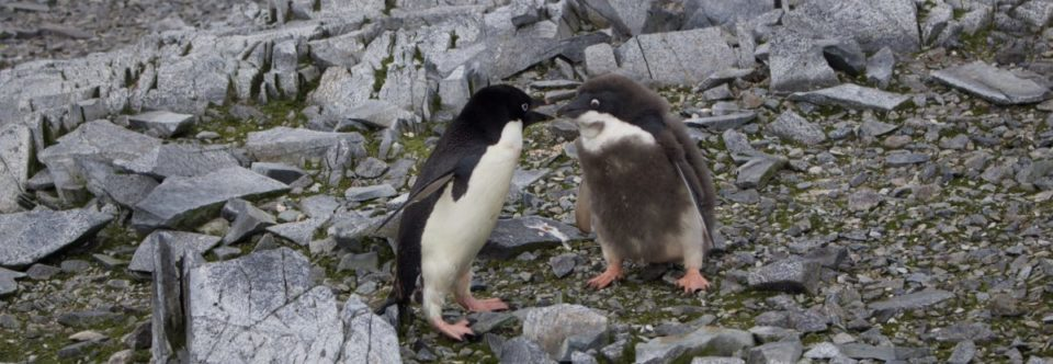 Life on the Rocks: Climate Change and Antarctic Biodiversity