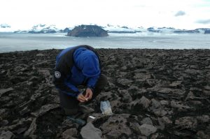 A team member collecting the samples on the sticky tape after the trap was exposed for a year (Source: Elster Josef)